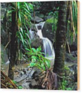 Waterfall El Yunque National Forest Mirror Image Wood Print
