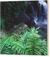 Waterfall El Yunque National Forest Wood Print