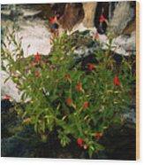 Waterfall Flowers Wood Print