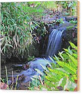 Waterfall In The Fern Garden Wood Print