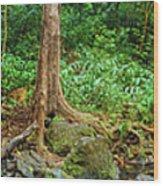 Waterfalls And Banyans Wood Print