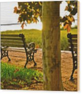 Waterfront Park Bench Wood Print by Lori Kesten