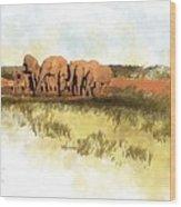Waterhole - Addo National Park  Wood Print