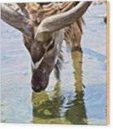 Watering Kudu Wood Print