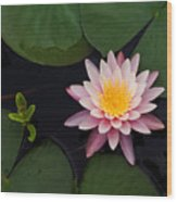 Waterlily - Study In Pink Wood Print