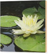 Waterlily In Yellow Wood Print