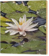 Waterlily On The Water Wood Print