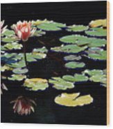 Waterlily Panorama Wood Print