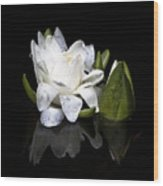 Waterlily  Reflection Wood Print