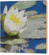Waterlily Reflections Wood Print