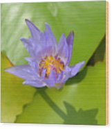 Waterlily Shadow Of Perfection Wood Print