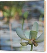 Waterlily Wash Horizontal Wood Print