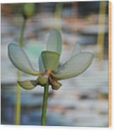 Waterlily Wash  Vertical Wood Print
