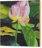 Waterlily Watercolor Wood Print