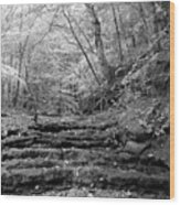 Waterscape In Bw Wood Print