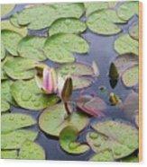 Watter Lily Wood Print
