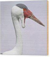 Wattled Crane V2 Wood Print