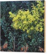 Wattyl - Wild Flower Of Australia Wood Print