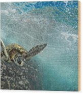 Wave Rider Turtle Wood Print