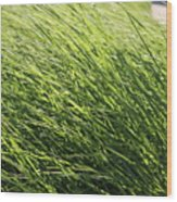 Waving Grass Wood Print