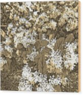 Waxleaf Privet Blooms On A Sunny Day In Sepia Tones Wood Print