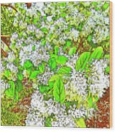 Waxleaf Privet Blooms On A Sunny Day Wood Print
