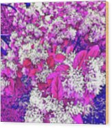 Waxleaf Privet Blooms On A Sunny Day With Magenta Hue Wood Print