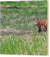 We Are 3 Red Fox Puppies Wood Print