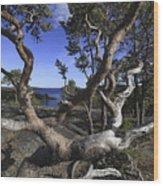 Weather Beaten Pine Tree At The Coast Wood Print