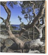 Weather Beaten Pine Tree At The Swedish High Coast Wood Print