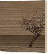 Weatherd Beach Tree Wood Print