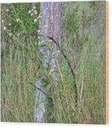 Weathered Fence Post Wood Print