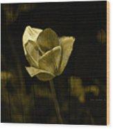 Weathered Golden Tulip Wood Print