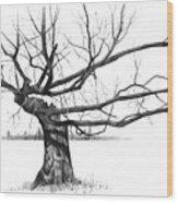 Weathered Old Tree Wood Print