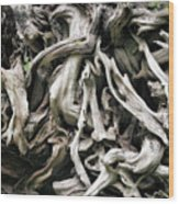 Weathered Roots - Sitka Spruce Tree Hoh Rain Forest Olympic National Park Wa Wood Print by Christine Till