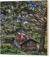 Weathered Shed Wood Print by David Patterson