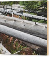 Weathered Trees Fallen Down Within Yellowstone National Park Wood Print