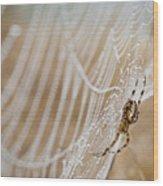 Web Administrator Wood Print