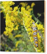 Webworm Moth Wood Print