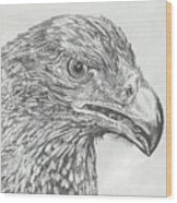 Wedgetail Eagle Wood Print