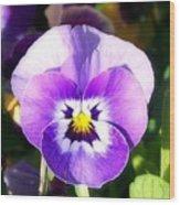 Wee Purple Pansey Wood Print