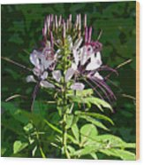 Weed With Whiskers Wood Print