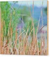 Weeds 033 Wood Print