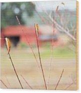 Weeds 037 Wood Print