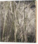 Weeds #1 - 310061 Wood Print