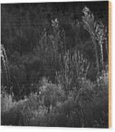 Weeds 5 Wood Print