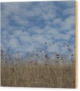 Weeds And Dappled Sky Wood Print