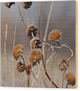 Weeds Are Pretty Too Wood Print