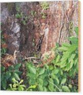 Weedy Beauty Wood Print