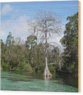 Weeki Wachee Springs Wood Print